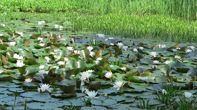 Krakow-Botanic-Gardens-Pond