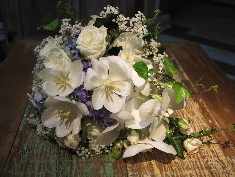 orquideas-flores-e-flores