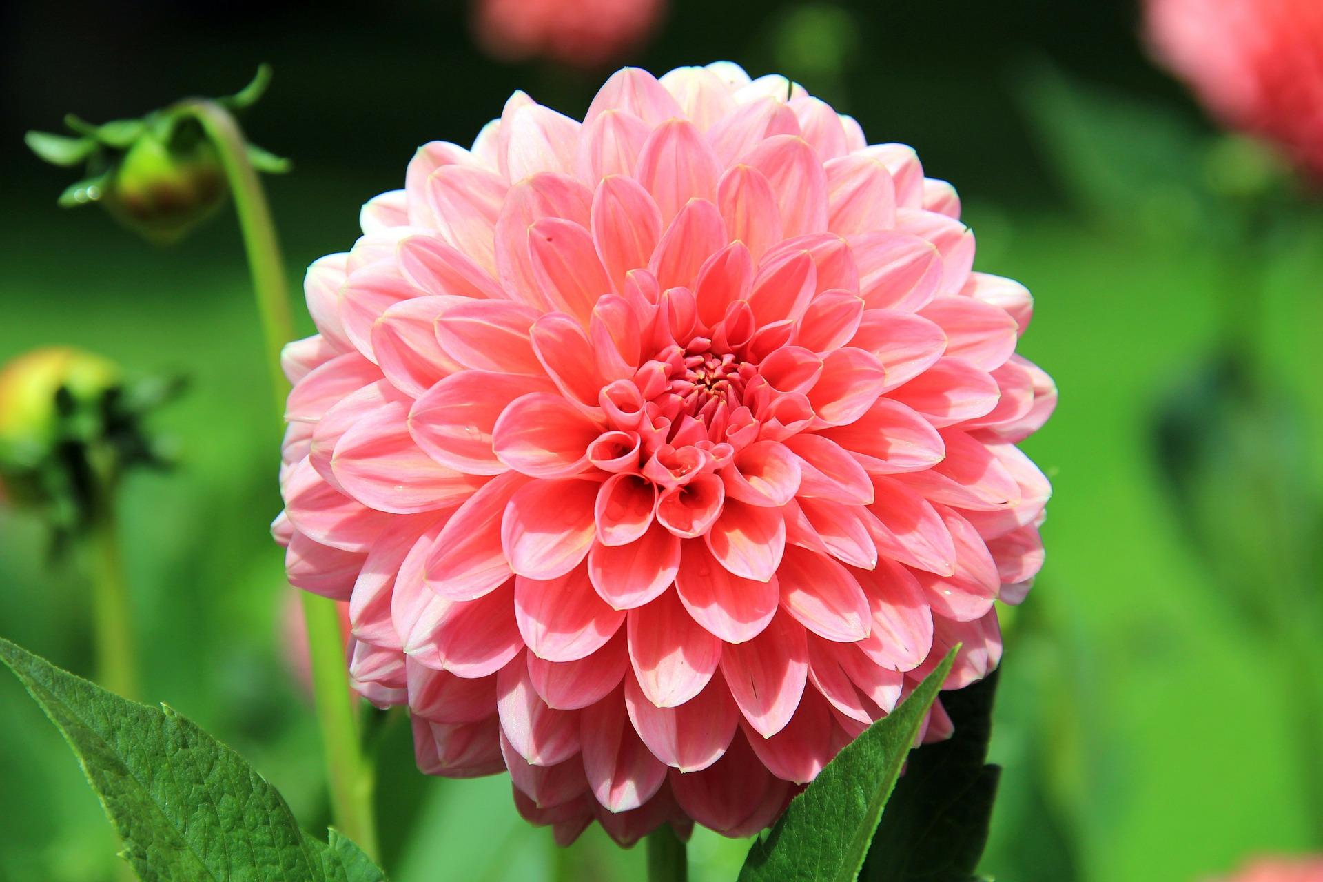Flores mais bonitas do Verão