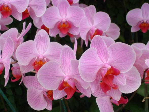 Flores mais bonitas do verão (2)