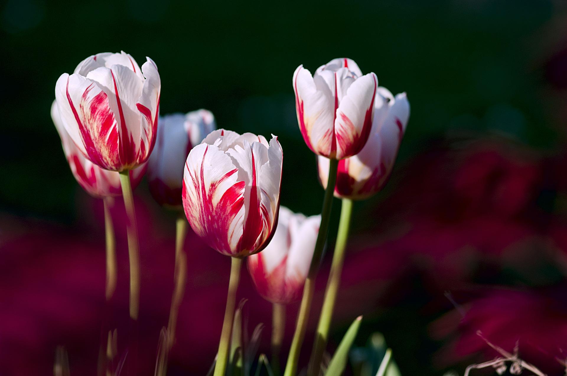 Flores para surpreender sua namorada