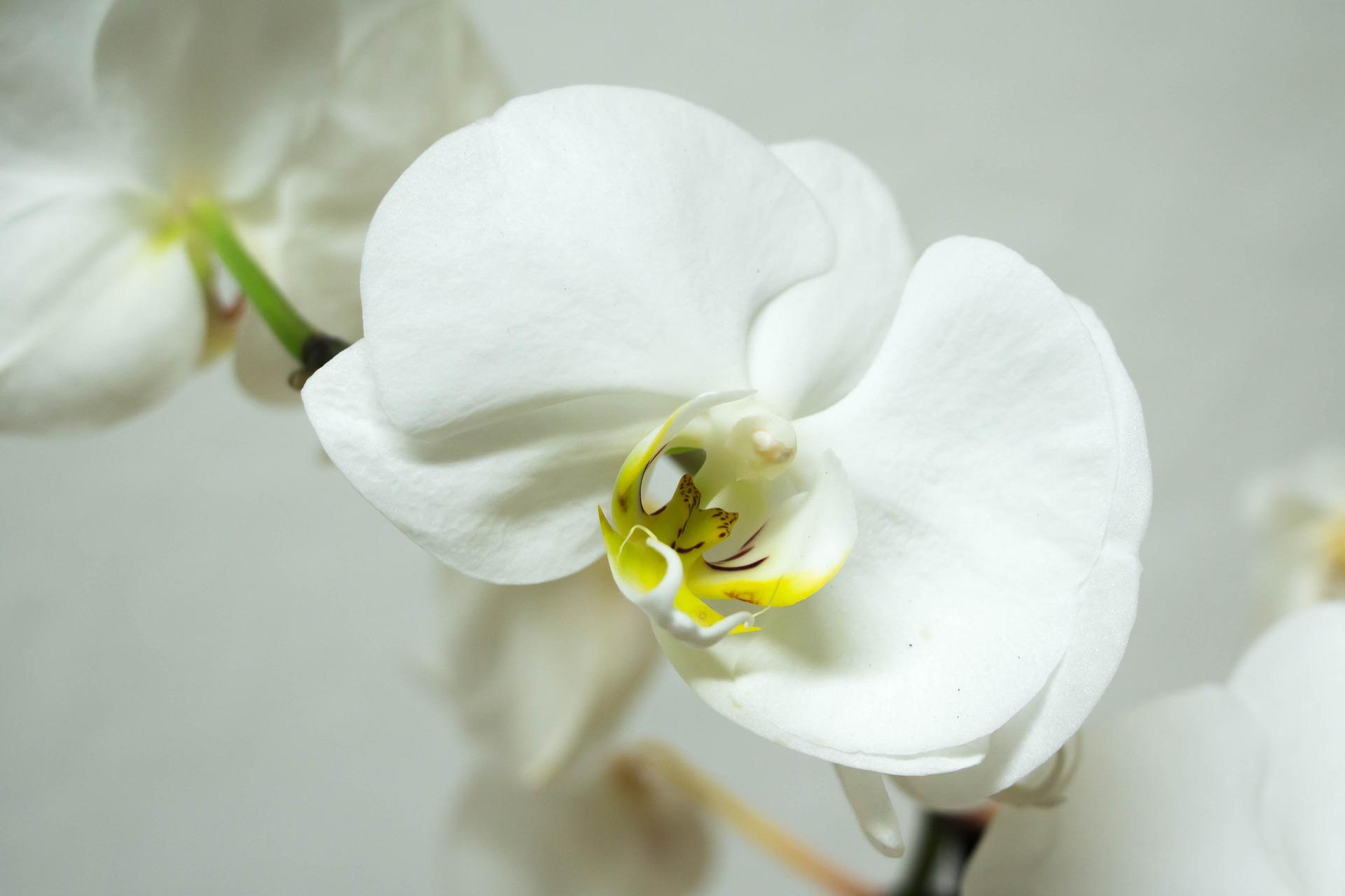 O encanto das orquídeas