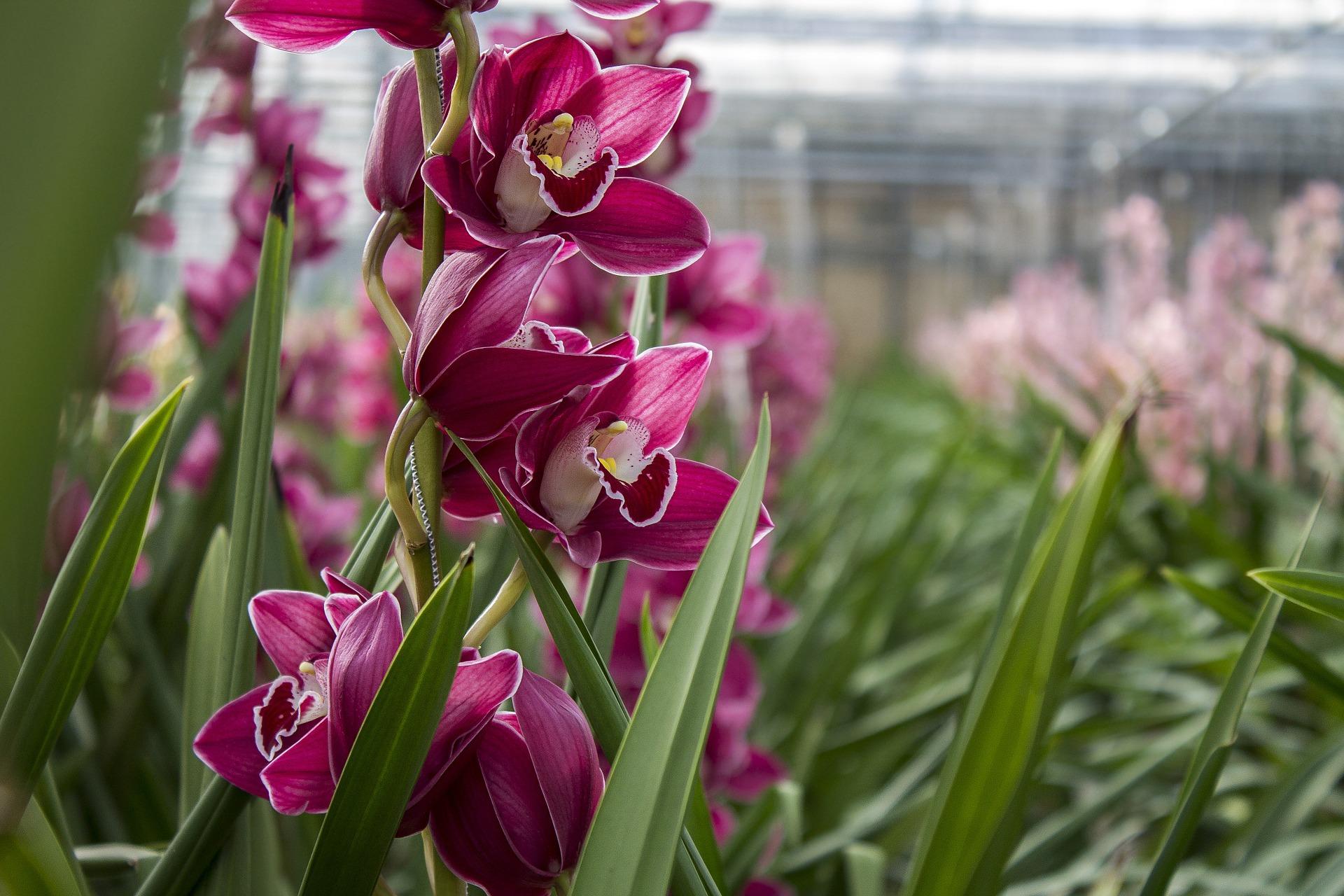 O encanto das orquideas