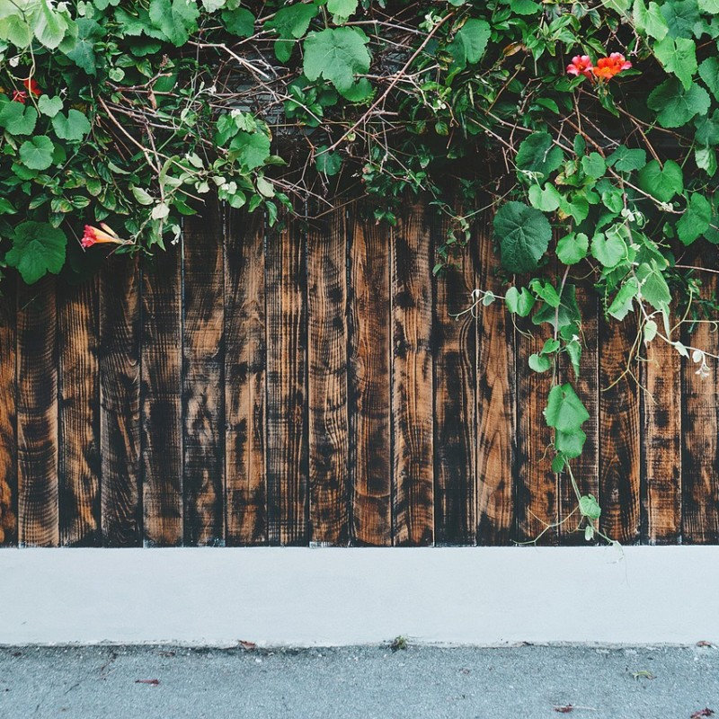 Jardins verticais: paredes que encantam