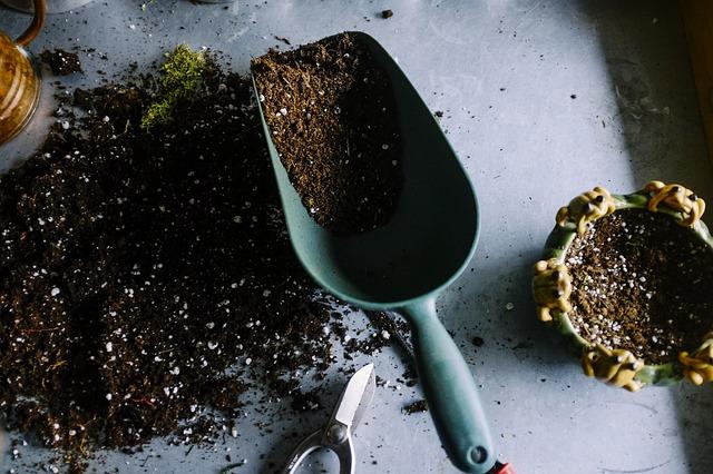 orquidea trocar de vaso