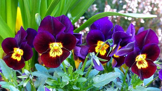 Fotos de vasos de flores naturais 26