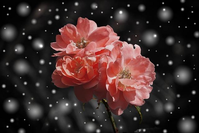 Flores mais bonitas do inverno: conheça as flores que encantam no frio