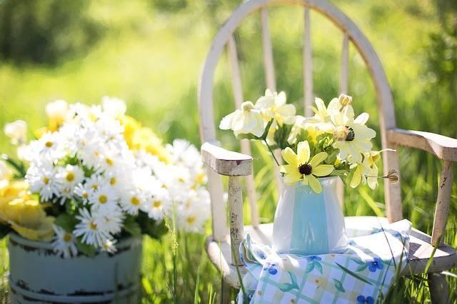 Singelas e cheias de vida: conheça as flores do campo