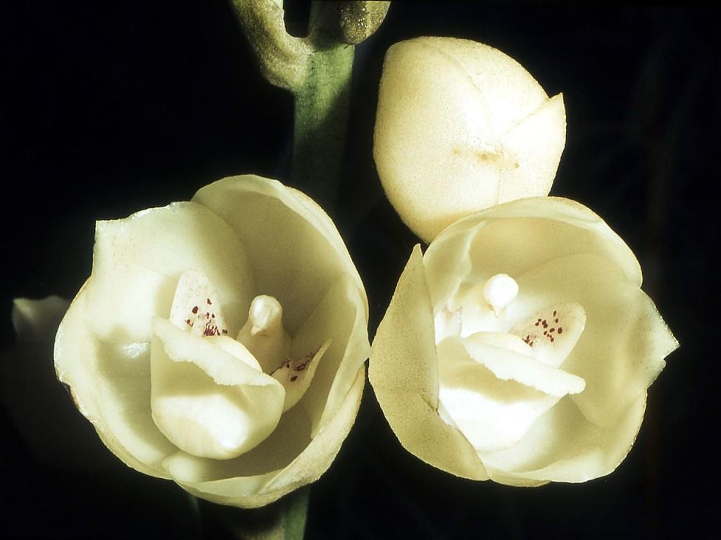 flores mais exóticas do mundo