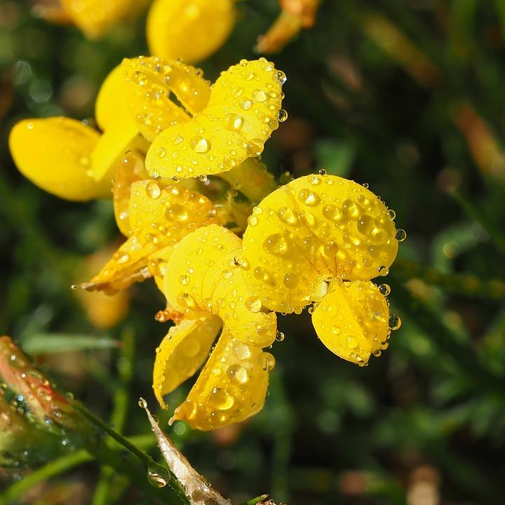 Cuidados com plantas e flores: o que não fazer com elas